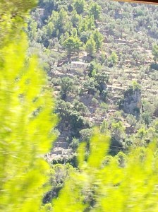 the view of terraced mountainside from the train to Soller